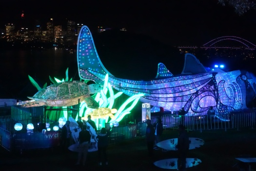 Huge shark at Vivid Sydney at Taronga Zoo