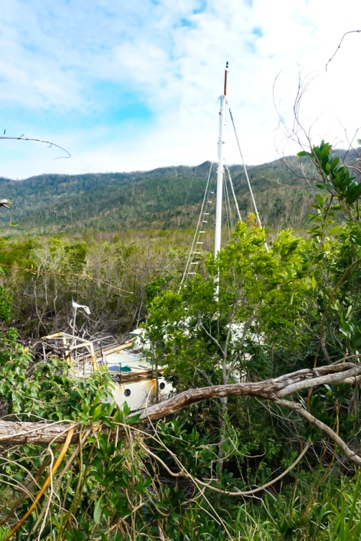 Cyclone damage with catamaran in the trees