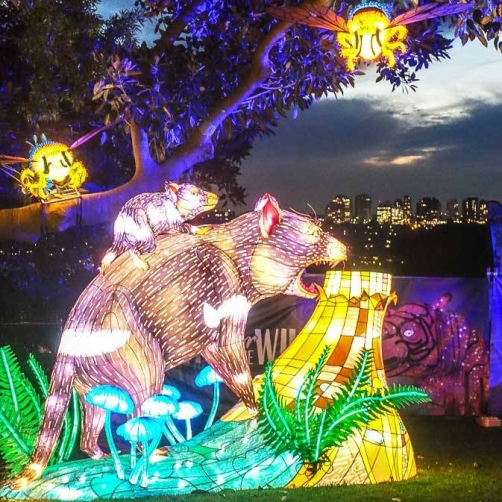 Vivid-at-Taronga-Zoo